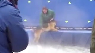 Animal Abuse On