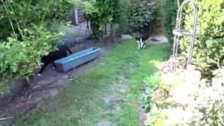 Feral Cats 7.17.15
