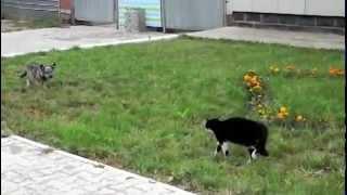القط  و الكلب وجه لوجه