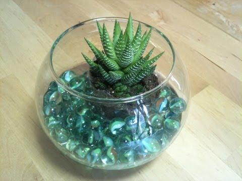 Cómo hacer un centro de mesa con cactus y pecera facilisimo