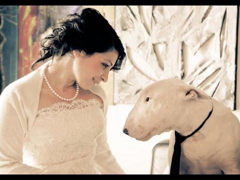 La realidad sobre el Bull Terrier ¡ATENCIÓN Perro potencialmente cariñoso.
