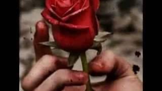Memories of rose. SID #vtoyz