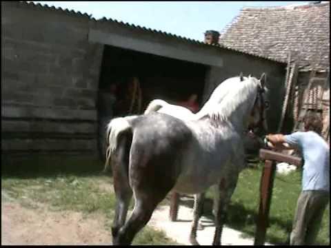 Xxx Mp4 Pastuh Toplica Otok Slavonija Horse Sex 3gp Sex