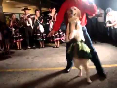 Xxx Mp4 XxxDog Salsa Dancing 3gp Sex