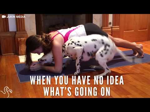 Dog Yoga: Pup Is Really Happy To Be In His Mom's Yoga Workout | The Dodo