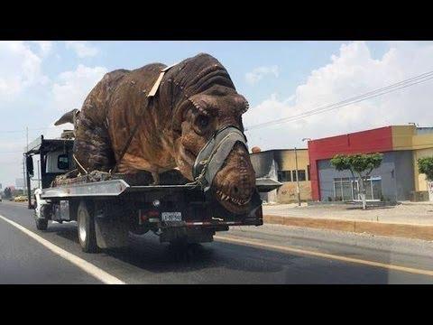 10 maior animal do mundo