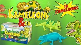 KAMELEONS & CO Boite Complète De 16 Caméléons Pochettes Surprise Altaya Jouet Toy Review Juguetes
