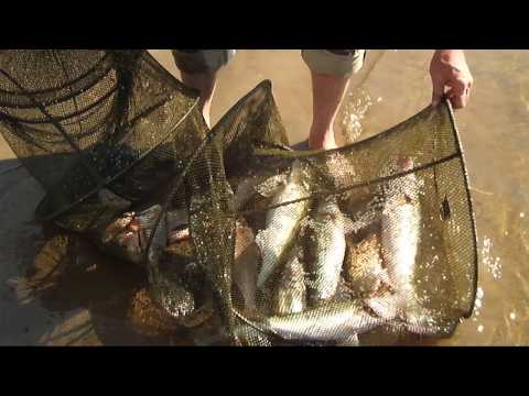 рыбалка на ахтубе в харабали в августе видео