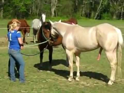 Xxx Mp4 Horses Fall In Love סוס וסוסה מתאהבים 3gp Sex