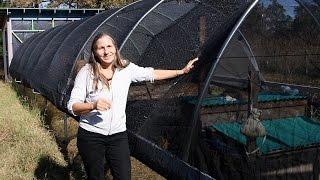 DIY Hoop House:  The Easy Greenhouse Alternative - Homesteading Basics