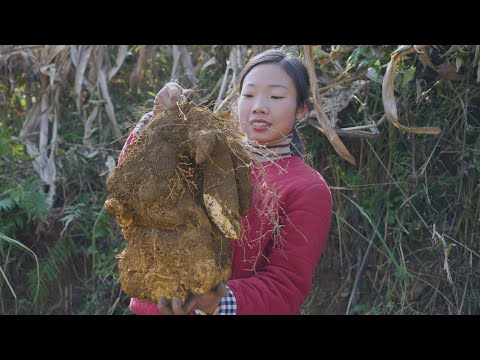 Chinese Food Dioscorea opposita and Preserved spareribs農村的淮山藥個頭� 特別大,隨便拿一點來做兩個家常菜,� 很� 吃