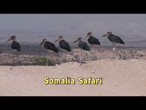 Somalia Safari Animals of Somalia