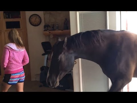 Xxx Mp4 Horse Walks Inside House To Chill With Owner 3gp Sex