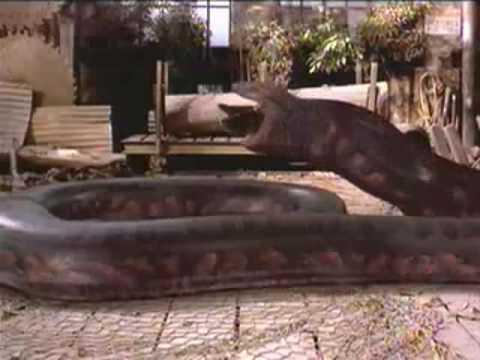 Anaconda comendo um homem cenas fortes