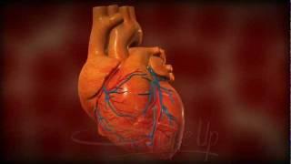 Medical Animation (heartbeat)