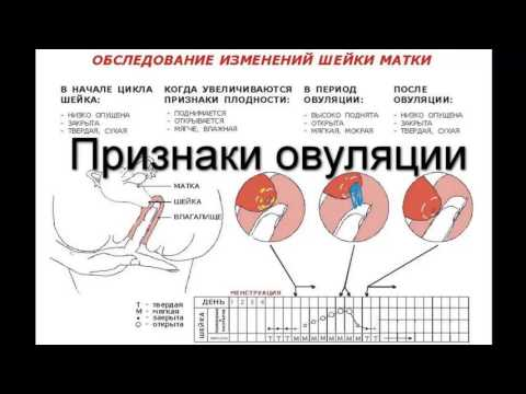 Прыщ перед месячными или беременность
