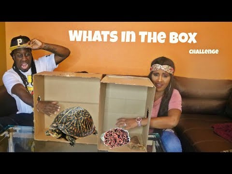 Xxx Mp4 What S In The BOX Challenge 3gp Sex