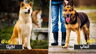 فصائل الكلاب الأكثر وفاءً بالعالم