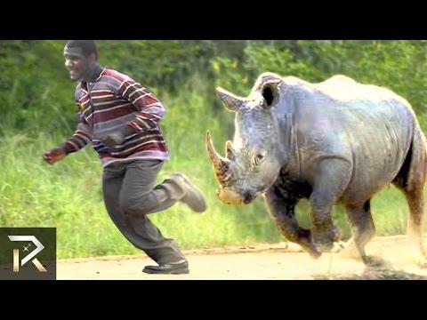 10 Crazy Animal Safari Incidents