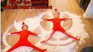 ELF ON THE SHELF IS REAL!