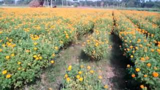 Indian  super agriculcer sistem  cultivation desi  lovely  histori