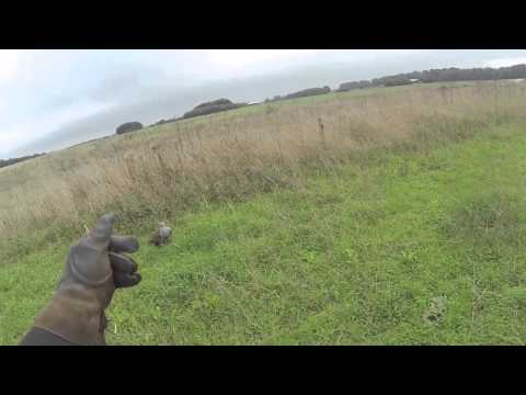 Falconry: Goshawk and Hares