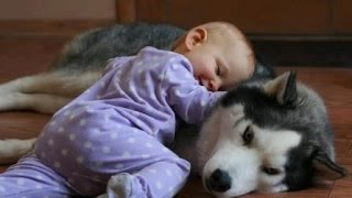 Funny Dogs and Babies Playing Together - Cute dog & baby compilation
