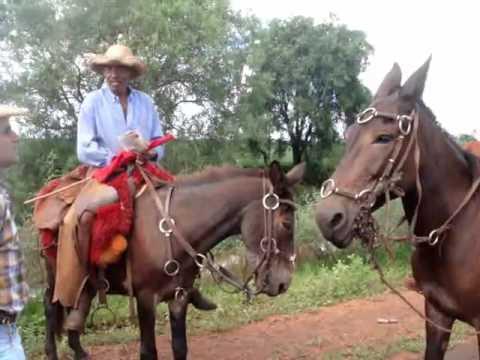 Boiada no Mato Grosso do Sul