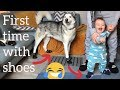 My Huskies and Baby wearing shoes for First time!! [TRY NOT TO LAUGH LOL]