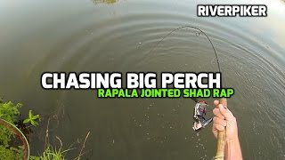Light Lure Fishing - Chasing big perch (video 46)