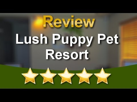 Lush Puppy Pet Resort Jupiter Review  Excellent  Five Star Review by Jenifer M.