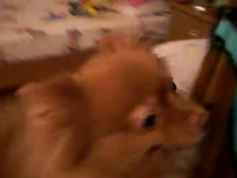 Girl dog humping to