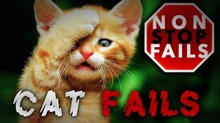 NonStop Cat Fails | Funny Cat Videos | Cats being stupid | Funny Cats 2016