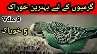 Best Food for Australian parrots In Summer: Garmi me best food in Urdu/Hindi, |Arham Naveed| Video.9