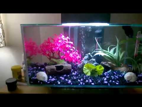 Xxx Mp4 Fluval Edge 6 Gal With One Male Betta RIP Tealy 3gp Sex