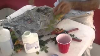 آموزش باغبانی با صابر قلمه گل رز در فصل پاییز