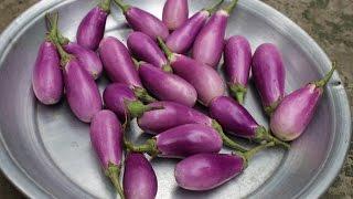 Village Food | Begun bahar recipe | Grandmother recipe-52