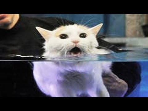 Cats Hate Water Funny Cats in Water Compilation 2016