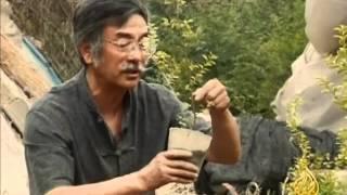 فن تقزيم الأشجار ينال اعجاب الصينيين