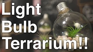 DIY Light Bulb Air Plant Terrarium!!