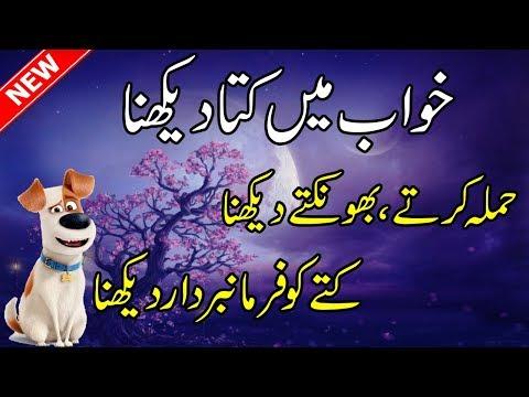 Xxx Mp4 Khwab Mein Kutta Dekhna Ki Tabeer In Urdu Dog Dream Meaning In Hindi Khawab Ki Tabeer 3gp Sex