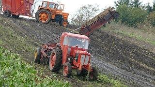 Hill Climbing in The Muddy Fields During Sugar Beet Harvest   Volvo BM320 & Fiat 615    DK Agri