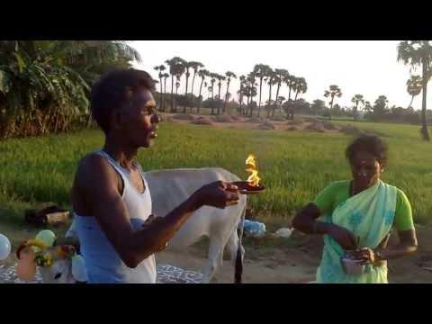 Xxx Mp4 Our Pongal Celebration 2013 3gp Sex