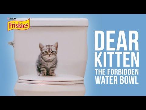 Dear Kitten The Forbidden Water Bowl