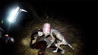 TERRIFYING Monsters That Might Actually Be REAL!