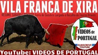 GRANDES MARRADAS SUSTOS CORNADAS: Largada de Touros Bravos, Feira Outubro 2016 - Videos Portugal