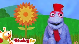 Yellow Flower with a Bee and a Rainbow full of Colors! | BabyTV