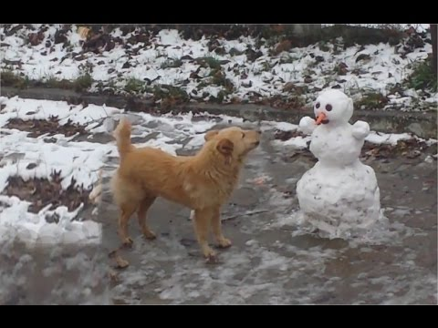 Funny DOG vs Snowman