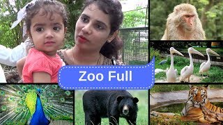 Indore Zoo Full Video (Animals playing together )