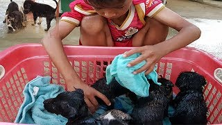 Lovely A little Boy Clean Baby Dogs Before Dogs Go Sleep-A little boy lovely his baby five baby dogs